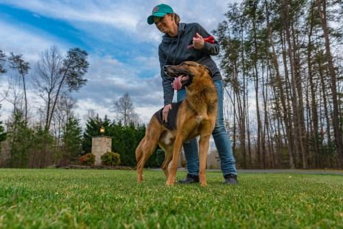 Dog Training Result